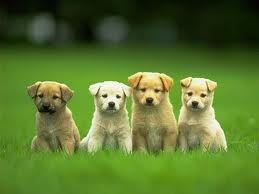 cute puppy baby animals